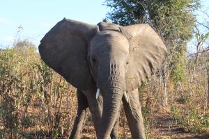 Photo taken in Chobe National Park, Botswana
