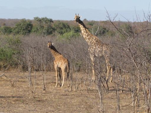 Photo taken in Chobe National Park in Botswana.