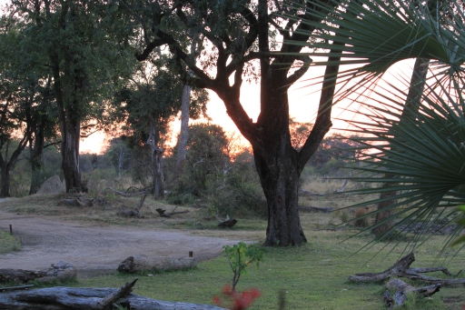 Yesterday I was working on a craft project using beer labels we've collected from our travels. I noticed I didn't have any from Africa and said we have to go back. I show a lot of photos of animals from Africa, but the landscape and sunsets wowed me just as much. Photo taken in Zambia.