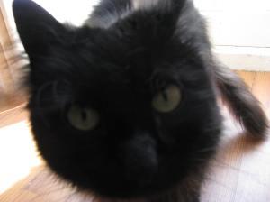 Atticus says hi