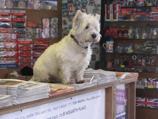 Outside of the Earl's Court Tube station you can see this Westie. Anyone want to buy a paper from this adorable guy?