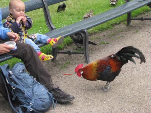 """""""Hey, kid. Do you feel like sharing?"""" Unfortunately the kid didn't. Photo taken in Copenhagen, July 2012."""