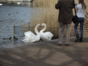 Love is in the air in Hyde Park