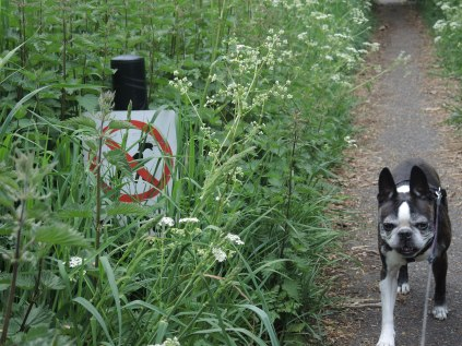 If you can't see the no dogs sign is Miles breaking the rule?