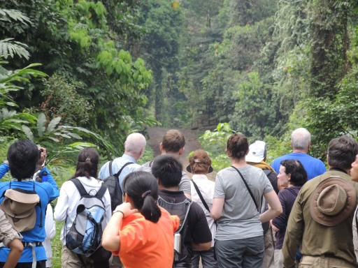 What do you think everyone is waiting for? Photo taken in Danum Valley, Malaysia.