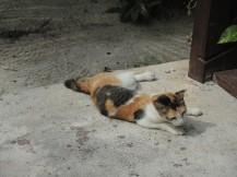 Discovered on Mabul Island, Malaysia