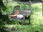Man sleeping in Brompton Cemetery, London