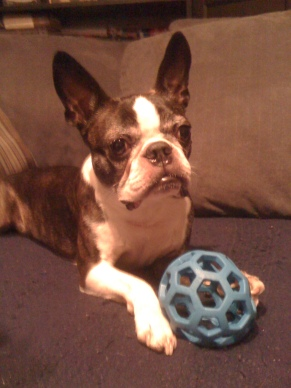 Miles and Blue Ball