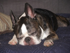 Sleeping Miles