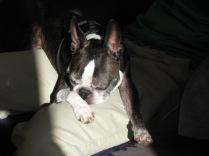 Sun worshipper Miles