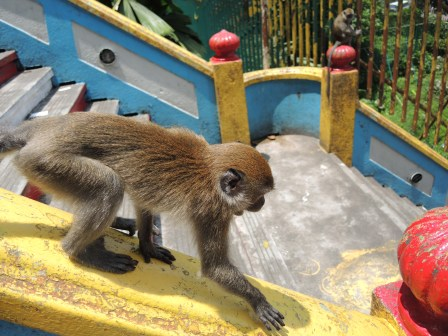 This macaque was sneaking up on an unsuspecting tourist in hopes of stealing his food. His efforts were thwarted since the tourist didn't have any food to steal. Photo taken at the Batu Caves in Malaysia.