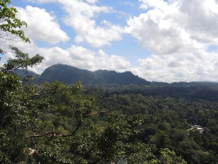 Danum Valley, Malaysia.