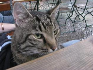 A friend we made at one of the cafes.